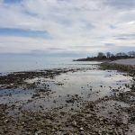 Ostseeurlaub mit Hund in Dahme