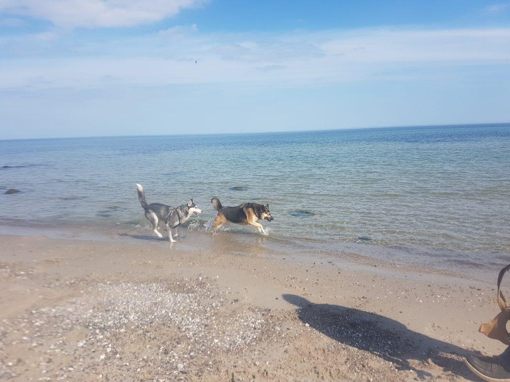 Ostsee Urlaub mit Hund in Dahme